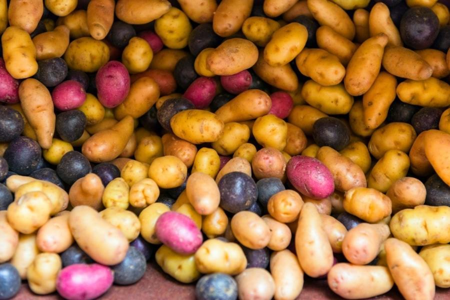 Mashed Potatoes Recipe
